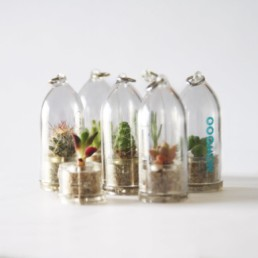 Baby Plante porte-clef : objet publicitaire avec plante vivante